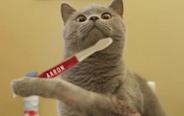 这只猫的眼神太魔性了,最后那个白眼真是绝了!