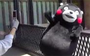活捉一只骄傲的熊本熊!