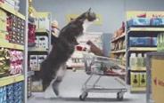 假如喵星人自己逛超市