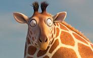 当长颈鹿胖成球,真是笑死我了!