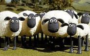 感觉羊们能这样玩一辈子