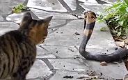 这些猫比有毒生物还可怕