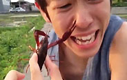作死少年鼻子被小龙虾夹住