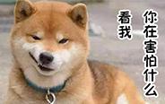 这是一群不正经的狗狗!