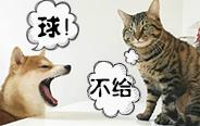狗蠢被猫欺,铲屎的帮我啦!