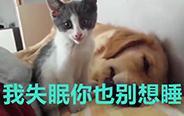 为什么摊上这么一个猫女友?