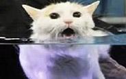 你是想把朕淹死嘛?