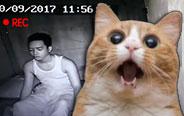 主人梦游把猫咪都吓傻了