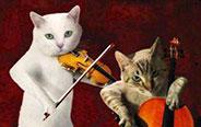 怎么?没见过猫咪玩音乐?