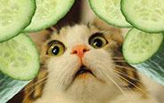 猫咪和黄瓜的小秘密