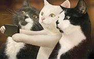 看看别人家的猫,羡慕!