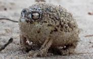 这蛙的叫声怎么这样啊