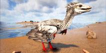 方舟滑翔机 驯服一只吃甲壳的鸟