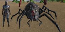 驯服一只蜘蛛无伤过毒气洞 【世界的猫精灵】
