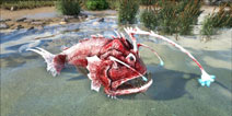 驯服不用鞍的深海怪物―安康鱼